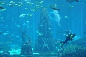 Aquarium Laut (Lost Chamber Aquarium)