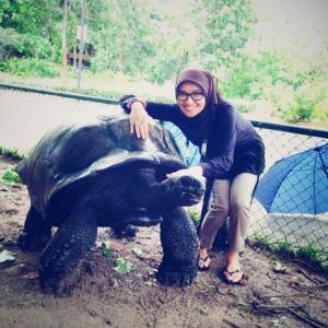 Taman tempat Kura-kura raksasa (Turquoise Turtle)